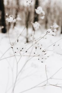 Kaboompics - Snow on dry twigs