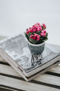 Kaboompics - Little pink flowers on a stack of magazines