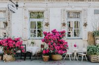 Beautiful pink rhododendrons in front of the restaurant in Łódź, Poland