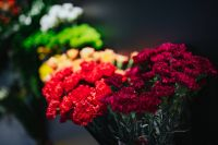 Kaboompics - Collection of colourful flower bouquets