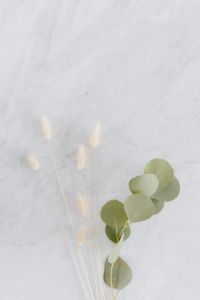 Kaboompics - Dried flowers and eucalyptus on white marble