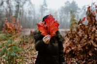 Kaboompics - The woman is holding the leaves of the red oak