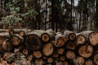 Kaboompics - Stack of felled wood in the forest