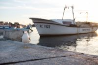 Kaboompics - Seagull at Nessebar Port, Bulgaria