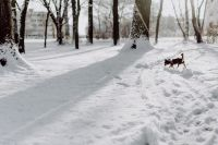 Kaboompics - Dog in a wintery park
