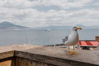 Kaboompics - Seagull and in the background volcano Vesuvius, Naples