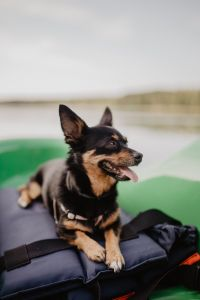 Happy dog in a kayak