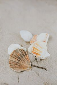 Kaboompics - seashells on the beach