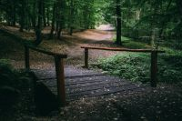 Kaboompics - Wooden bridge in a forest