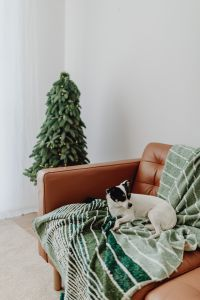 Kaboompics - Christmas with the little dog
