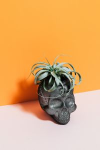 Kaboompics - Halloween objects with negative space