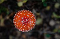 Kaboompics - Toadstool growing in the forest