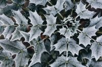 Kaboompics - Detail of leaves covered in frost