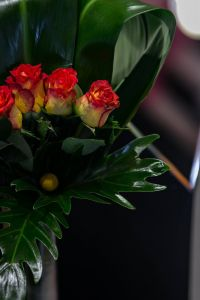 Close-up of little red and yellow roses