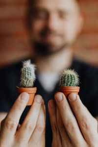 Miniature cacti in clay pots