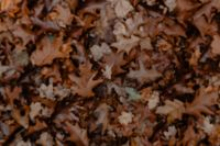 Kaboompics - Autumn leaves - shades of brown