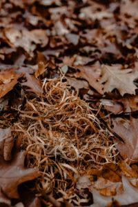 Kaboompics - Autumn leaves & sawdust - shades of brown