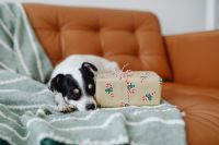Christmas - a small dog with a gift on the sofa