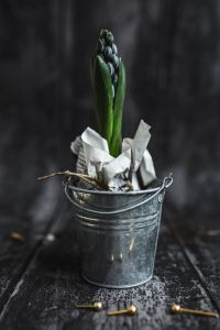 Kaboompics - Green plant in a metal bucket pot