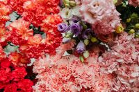 Kaboompics - Various multicolored fresh flowers (carnations, eustoma)