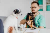 Kaboompics - Young male doctor with dog - vet