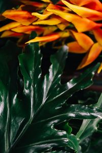 Kaboompics - Close-ups of green plant leaves