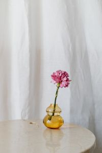Kaboompics - Pink Carnation in a Vase