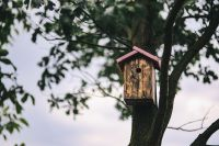 Kaboompics - Birdhouse on a Tree
