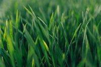 Kaboompics - Close-ups of green grass