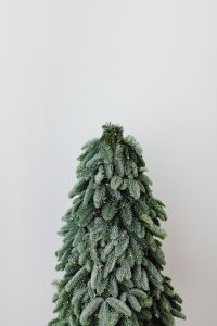 Kaboompics - Christmas tree