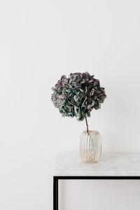 Hydrangea on a Marble Table