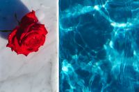 Marble & fresh garden rose on the blue water of a swimming pool