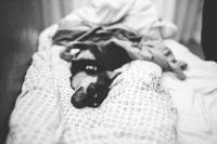 Kaboompics - Dog lying on a bed