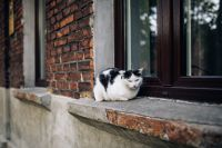 Kaboompics - Cat lying on a windowsill