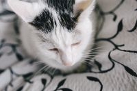 Kaboompics - Portraits of white sad cat