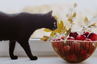 Kaboompics - Red apples, golden oak leaves and black cat
