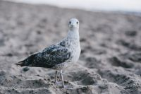 Kaboompics - White seagull on the beach