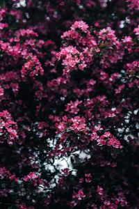 Kaboompics - Lovely pink flowers blooming from the tree branches