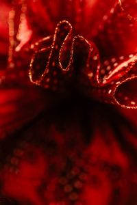 Kaboompics - Close-up of the red tulle bow