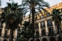 Kaboompics - Palm trees in Spain