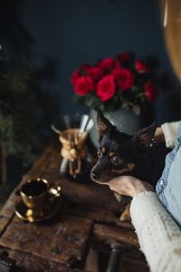 Kaboompics - Enjoying a finely brewed coffee and playing with a dog