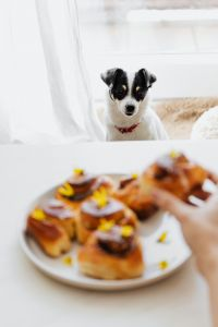 Kaboompics - Cute small dog wants cinnamon roll
