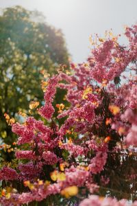 Kaboompics - Beautiful pink blossoming tree