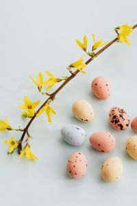 Kaboompics - Easter Eggs & Forsythia