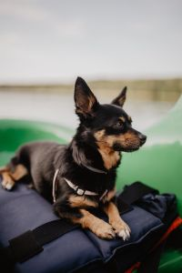 Kaboompics - Happy dog in a kayak
