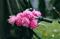 Kaboompics - Beautiful pink flowers in a bicycle basket