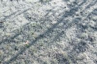 Kaboompics - Frost covered grass in the morning