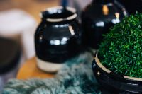Green plant in a black pot with black jars and a soft cyan rug