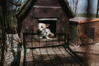 Kaboompics - Dog in a kennel