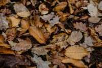 Kaboompics - Autumn leaves - shades of brown and orange